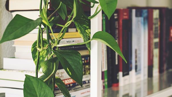 how to organizze books